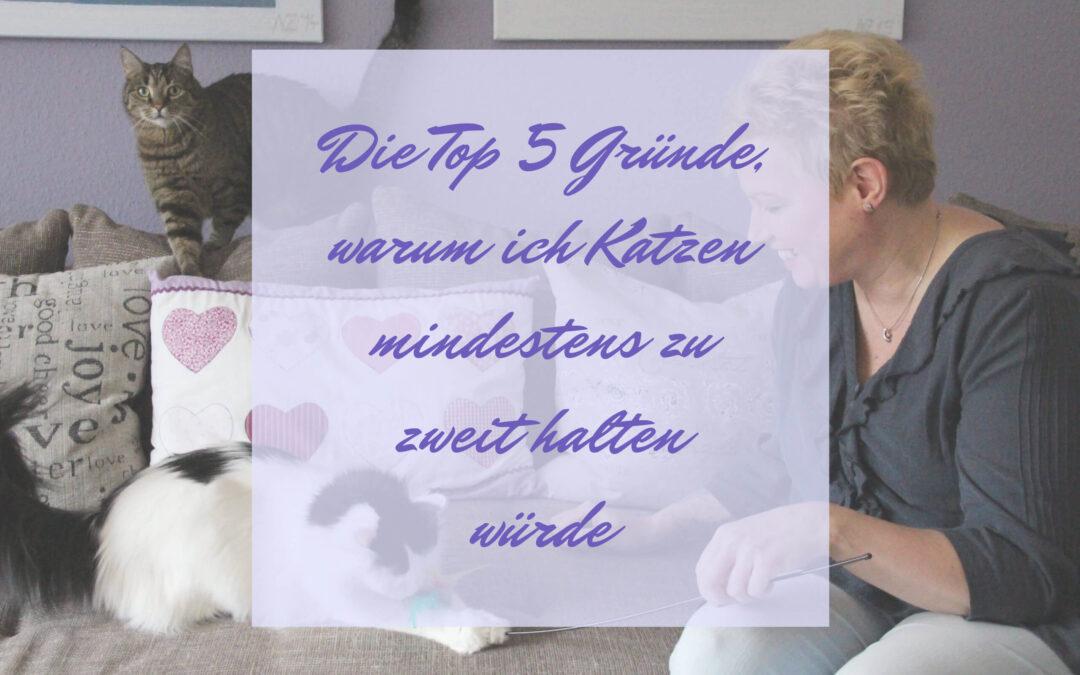 Die Top 5 Gründe, warum ich Katzen mindestens zu zweit halten würde