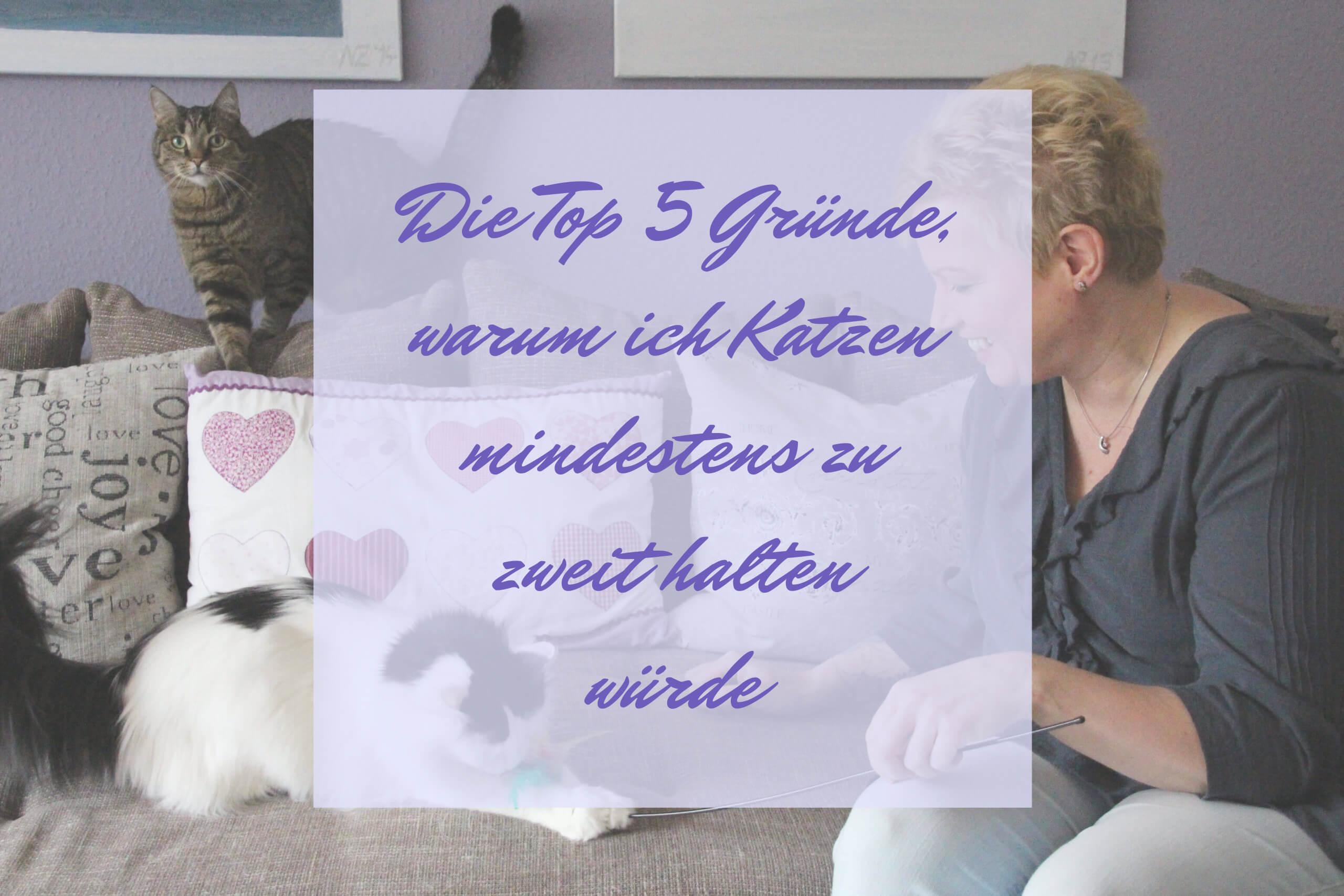 Katzen mindestens zu zweit halten